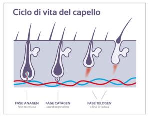 FARMACIA-SAN-CARLO-CICLO-DI-VITA-DEL-CAPELLO