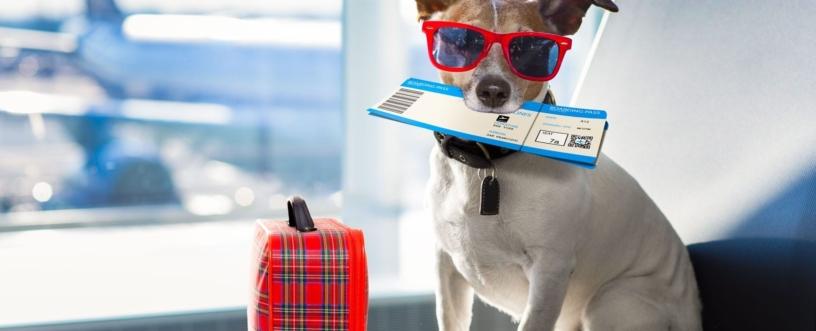 Vacanze-con-il-cane Farmacia San Carlo
