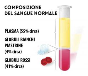 composizione del sangue normale